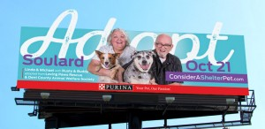 Purina billboard advertising design