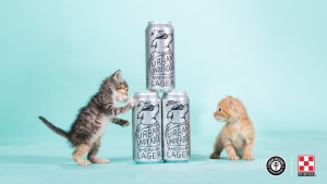 We partnered with Urban Chestnut Brewing Company for the 2017 #ConsiderAShelterPet adoption campaign.
